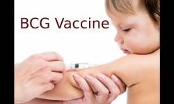 ભારતીય BCG રસી કોરોના સામે અસરકારક : ન્યૂયોર્ક ઈન્સ્ટિટ્યુટ ઓફ ટેકનોલોજી