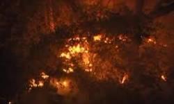 પારડી નજીક ચીવલ ડુંગર પર આગ લાગી
