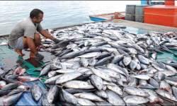 નિકાસ બંધ થતા વેરાવળમાં ૧૦૦૦ કરોડની માછલીઓનો સ્ટોક કોલ્ડ સ્ટોરેજમાં કેદ