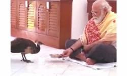 PM મોદીનો પ્રકૃતિ પ્રેમ: વડા પ્રધાને મોરને દાણા ખવડાવતો વીડિયો શેર કર્યો