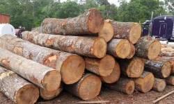 સાગી લાકડા તોડ પ્રકરણમાં વધુ એકની ધરપકડ