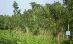 હરિયાળુ ગ્રામ યોજના અંતર્ગત સુરત જિલ્લાના 8 ગામોમાં 3200 રોપાનું વાવેતર કરાયું