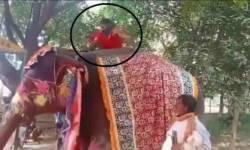 યોગગુરુ બાબા રામદેવ ને હાથી ઉપર યોગ કરવાનું ભારે પડ્યું ! જમીન ઉપર પટકાયા ! લોકો એ 'જોકર' કહી ને કરી મજાક !