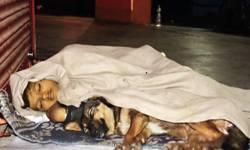 હે ભગવાન  ! UPનો દર્દનાક કિસ્સો : પિતા જેલમાં, નિષ્ઠુર મા બાળકને રસ્તે છોડીને જતી રહી, ૯ વર્ષનું બાળક કૂતરા સાથે ફુટપાથ પર રહેવા મજબૂર