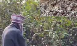 સુરત જિલ્લામાં ખેડૂતોને કપાસના પૂરતા ભાવ મળતા નથી, ભારત કપાસ નિગમ દ્વારા મુખ્યમંત્રીને પત્ર લખાયો