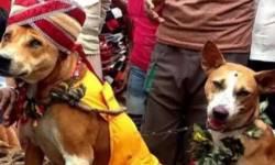 આખા દેશમાં જાગી ચર્ચા કારણ કે કૂતરા અને કૂતરીએ લીધા 7 ફેરા, 800 લોકોનો યોજાયો જમણવાર