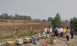 સુરત:કૃષિ વિજ્ઞાન કેન્દ્ર દ્વારા ખેડૂતોને મધમાખી પાલનની વ્યવસાયિક તાલીમ આપવામાં આવી