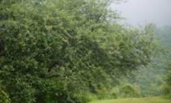 પોશીનાના ગણવા ગામમાંથી ત્યજી દેવાયેલું નવજાત શિશુ મળી આવ્યું