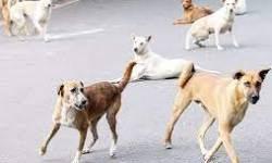 મહિલાઓની ઈજ્જત ન કરનારા લુખ્ખા તત્વો કરતાં તો રાજકોટના કૂતરાંઓ સારા,વીડિયો વાયરલ થયો