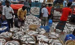 ચાઇનાની આડોડાઇ અને દાદાગીરીના લીધે ગુજરાતના SEA FOOD એક્સપોર્ટરોના કરોડો રૂપિયા ફસાયા