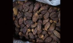 સુરત DRIએ પાકિસ્તાની ખારેકનો  રૂ.50 લાખનો જથ્થો પકડ્યો