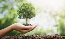 બારડોલી નગર ભાજપા દ્વારા નગરના જુદા જુદા વોર્ડમાં વૃક્ષારોપણ કરવામાં આવ્યું