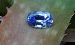 શ્રીલંકામાં ઘરની પાછળ ખોદકામ દરમિયાન મળ્યો દુર્લભ કિંમતી પથ્થર, Serendipity Sapphire ની કિંમત 10 કરોડ ડોલર