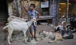 ઈદ નિમિત્તે પાકિસ્તાનમાં 90 લાખ પશુઓની કુરબાની અપાઈ, 40 લાખ ગાયોનો પણ સમાવેશ
