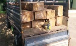 ડાંગ જિલ્લાના ચીચીનાગાંવઠા વન વિભાગ ની ટીમે હરીપુરા સીમાડે થી ગેરકાયદેસર લઇ જવાતા સાગી લાકડા ઝડપયા